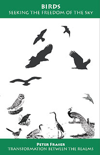 Peter Fraser: Birds, Seeking the Freedom of the Sky