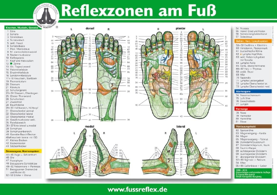 Reflexzonen am Fuß - Poster A4, Hanne Marquardt - Narayana Verlag